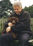 President Clinton with Chocolate Labradore Retriever, Buddy