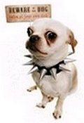 Chihuahua - Beware of Dog