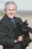 President George W. Bush with Scottish Terrier, Barney