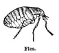 Graphic of insect