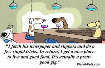 pet cartoon
